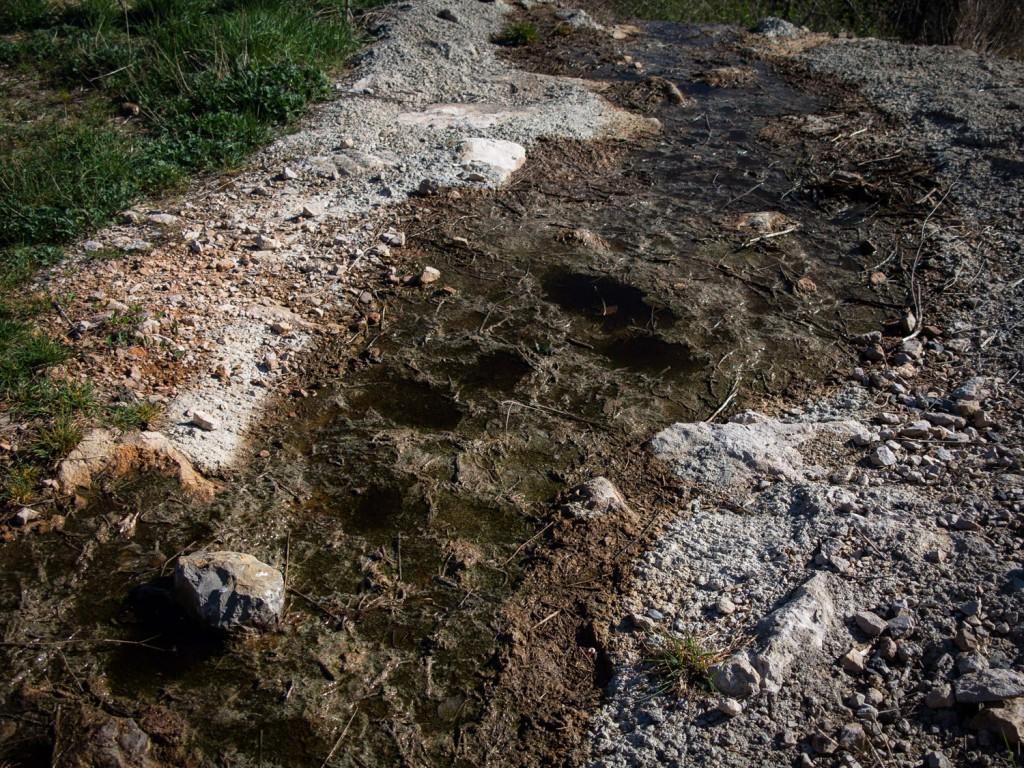 Traces d'animaux à proximité de flaques polluées. On ne sait pas s'ils se sont abreuvés ici.